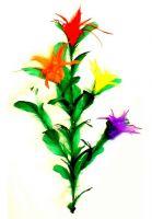 Stockblume mit Stock - 5 Blüten