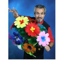 Stock zu Riesenblume, 7 Blüten