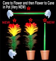 Cane to Flower and then Flower to Cane in Pot