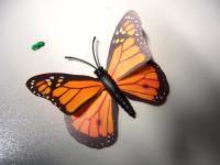 Meet the Butterfly!