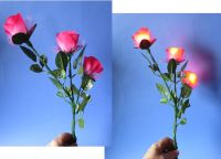 D Rose - Triple